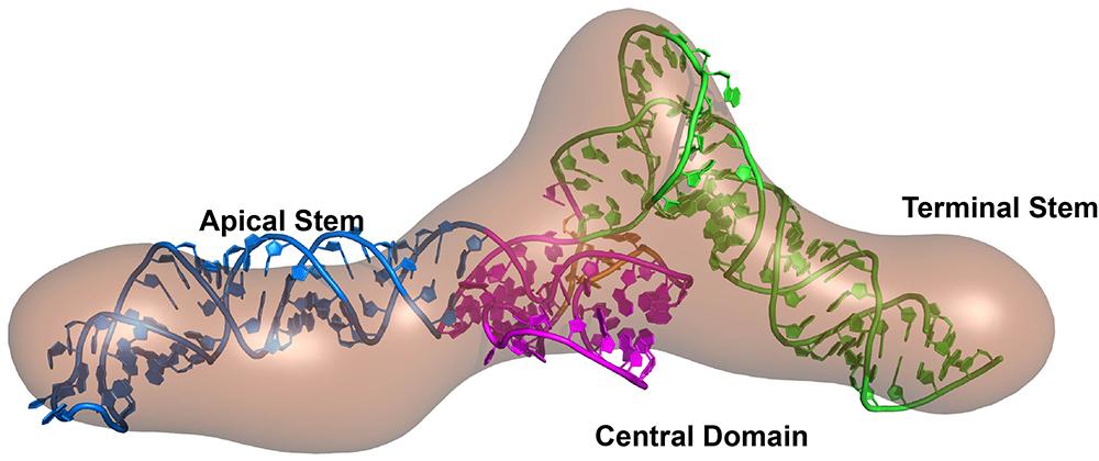 VAI RNA